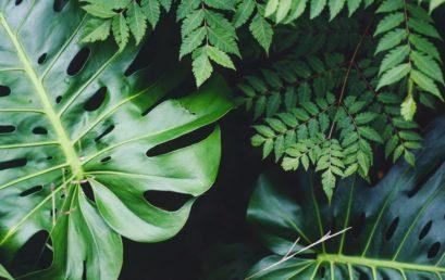 Di che colore sono le piante?